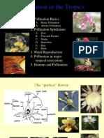 Plant Animal
