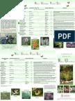 New York; Rain Garden Plant List - Cornell University
