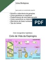 Ciclos Biologicos PB