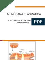 4__Membrana_Celular