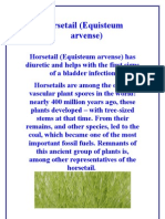 Horsetail - http://ourgreenlife.info/?p=761