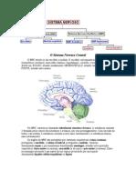 O Sistema Nervoso Central