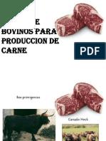 BOVINO DE CARNE