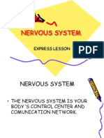 Nervous System Express Lessonppt