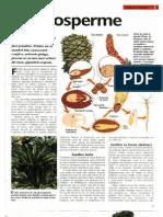 Animale Si Plante - Gimnosperme
