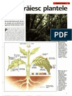 Animale Si Plante - Cum Traiesc Plantele