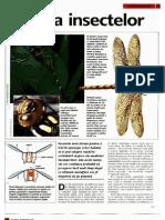 Animale Si Plante - Lumea insectelor