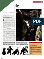 Animale Si Plante - Gorilele