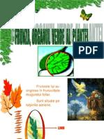 Frunza Organul Verde Al Plantei