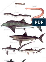 longman's encyclopedia- fishes