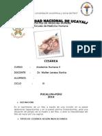 SeminRIO de CESAREA- Arreglado