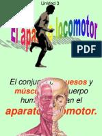 el esqueleto humano