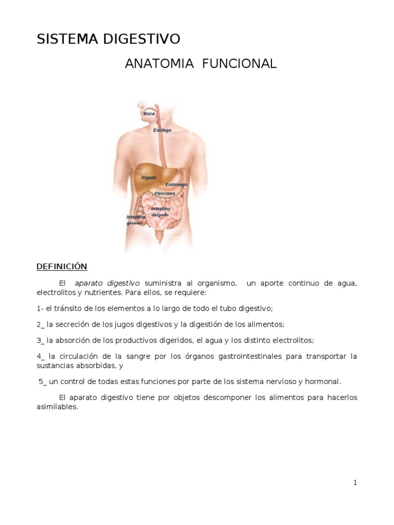 Fantástico Anatomía Funcional Del Sistema Digestivo Ejercicio 25 ...