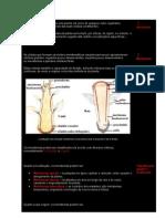 A Anatomia e Morfologia de Uma Planta