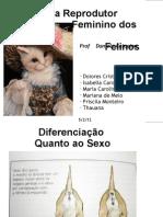 Aparelho Reprodutor Feminino Felino