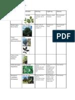 Alabama; Piedmont  Rain Garden Potential Plant List