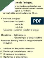 Anatomía Faringea