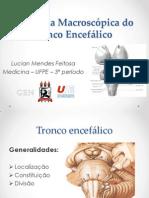 Anatomia Macroscópica do Tronco Encefálico - AULA (2)