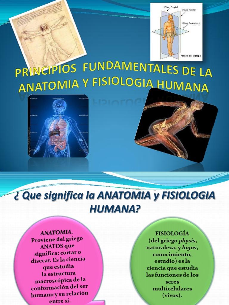Fantástico Cuál Es La Relación Entre La Anatomía Y Fisiología Humana ...