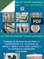 Cultivo in Vitro de Tejidos Vegetales