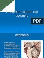 Anatoma Externa Del Cerebelo