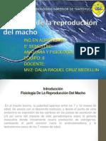 Fisiologia de Reproduccion Del Macho