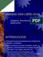 Amebas de Vida Libre 2