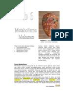 Bb6-Metabolisme