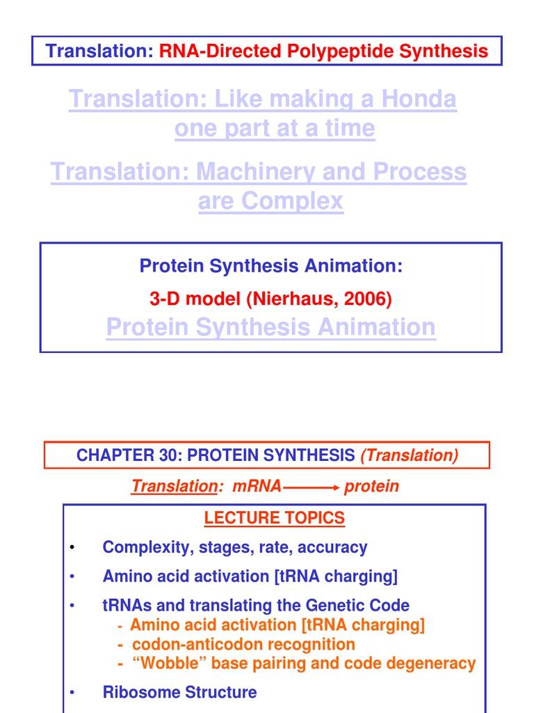 Ribosome Information | Translation (Biology) | Ribosome