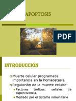Clase 5  Apoptosis