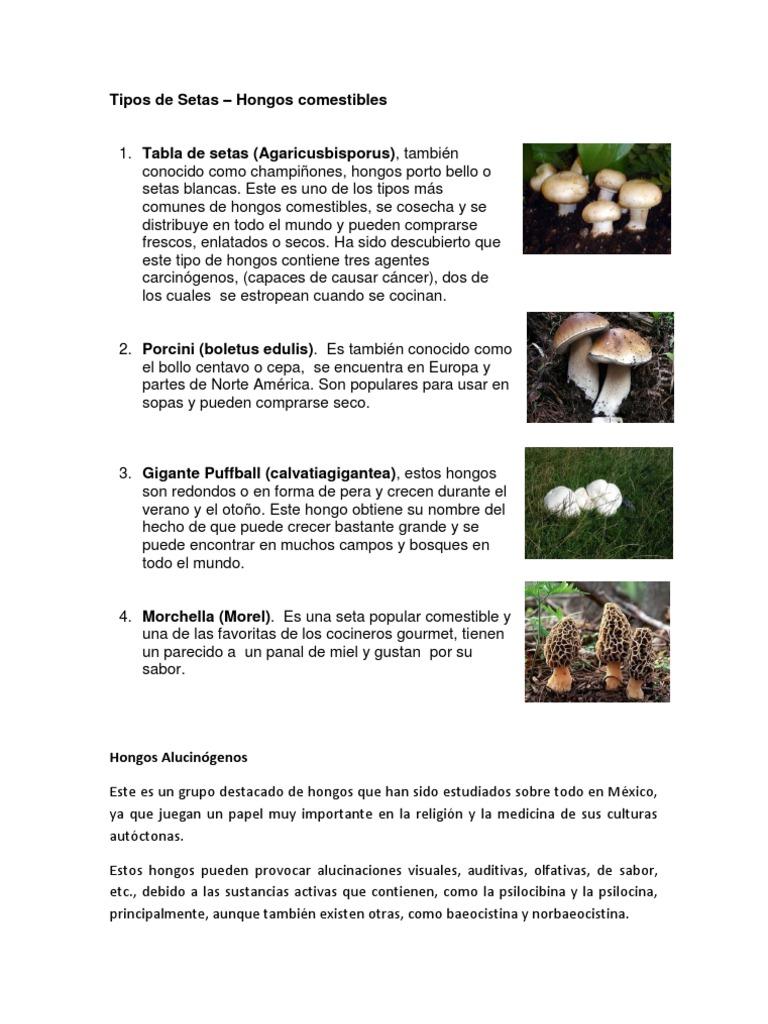 clases de hongos con sus nombres en español