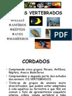 Biologia PPT Vertebra Dos