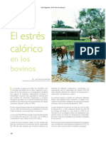 estres calorico bovinos