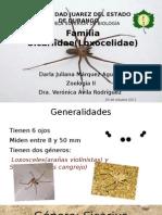 Familia Sicariidae(Loxocelidae)