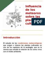 6 PLANTAS CULTIVADAS-METEOROS
