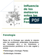 7 FENOLOGIA