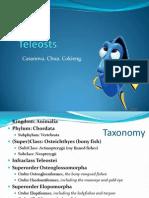 Teleosts