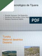 Matorral Desertico Tundra Matorral Desertico