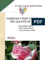 Cosecha de Rosa EXPOSICIONN