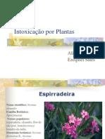 Apresentacao Into Xi Cacao Por Plantas