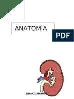 Anatomia y Fisiologia Del Sistema rio