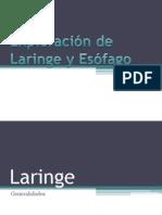 Laringe y Esofago
