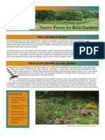 Virginia; Native Plants for Rain Gardens - Alliance for the Chesapeake Bay