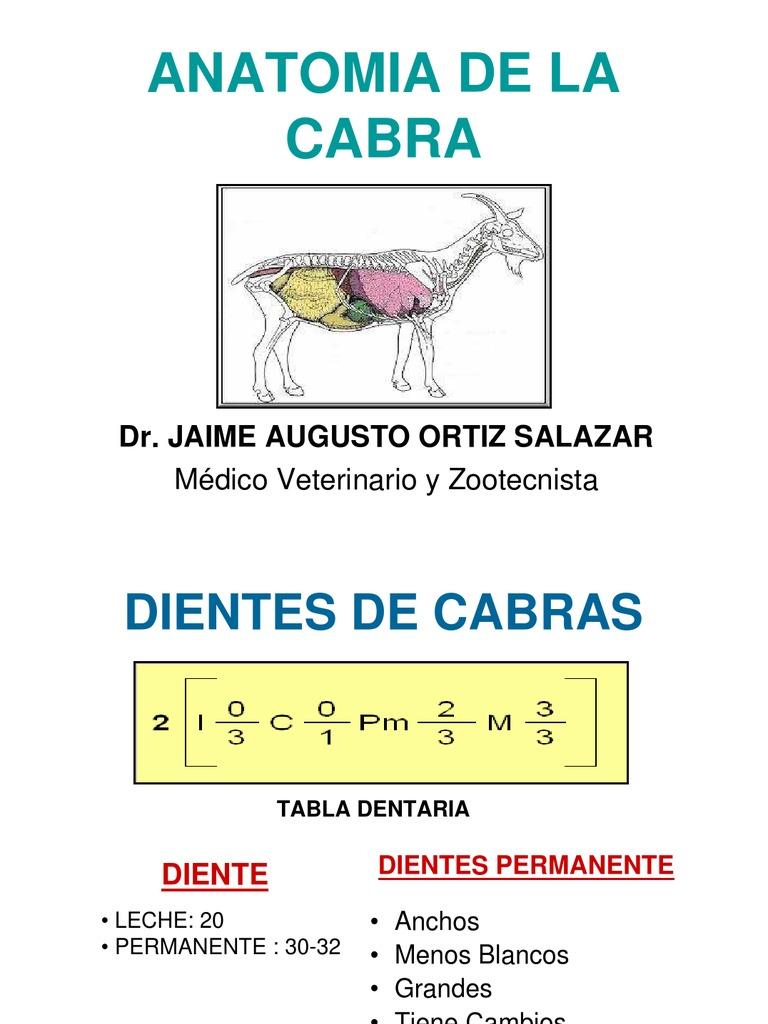 Atractivo Anatomía De Una Cabra Bandera - Anatomía de Las ...