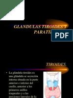Clase 6 Glándulas tiroides y paratiroides