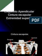 Diapositiva esqueleto l