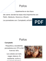 patos aves