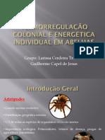 Termorregulação colonial e energética individual em abelhas sem