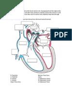 SL Cardiopulmonary