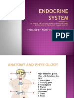 Endocrine System Power Point